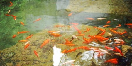Artificial pond with goldfishes for relaxation - toned photo.