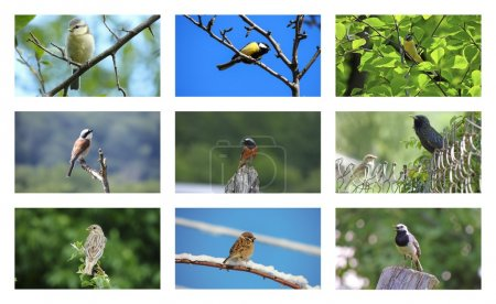 Collection of photos of birds