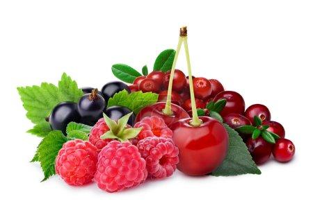 Raspberry, blackcurrant,cherry,lingonberry,cranberry