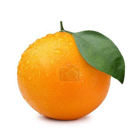 Photo pour Seul orange avec feuille recouverte de gouttes. Infinie profondeur de champ, chemins de détourage - image libre de droit