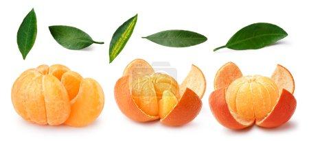 Tangerine,mandarin,clementine,leaves set