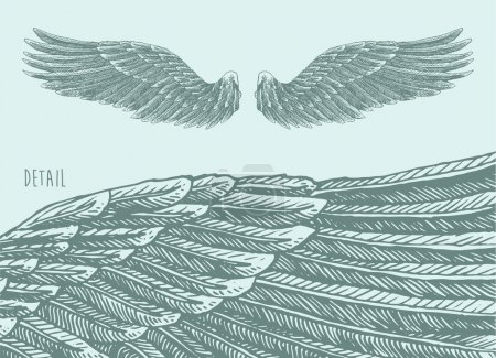 Illustration for Angel wings illustration, engraved style, hand drawn, sketch - Royalty Free Image