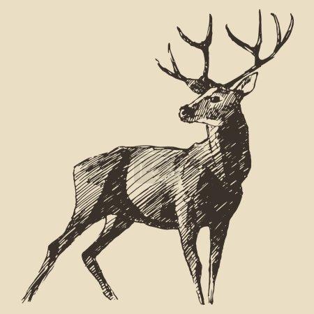 Illustration pour Style gravure sur cerf, illustration vintage, dessin à la main - image libre de droit