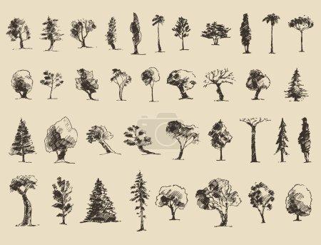 Illustration for Trees sketch set, vintage vector illustration, engraved style, hand drawn - Royalty Free Image