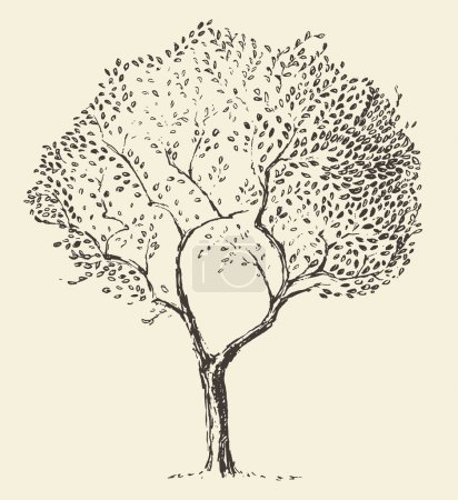 Illustration for Young olive tree illustration vector hand drawn sketch - Royalty Free Image
