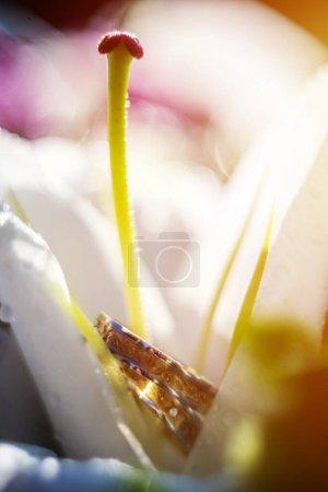 Photo for Beautiful jewel wedding rings closeup macro photography - Royalty Free Image