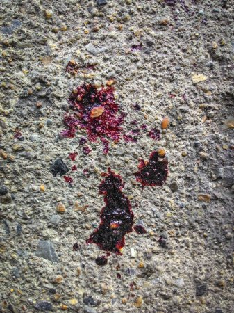 Photo for Dry Blood droplet on the concrete floor. - Royalty Free Image