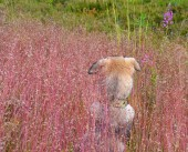Nape of home  puppy who for the first time saw  wild nature