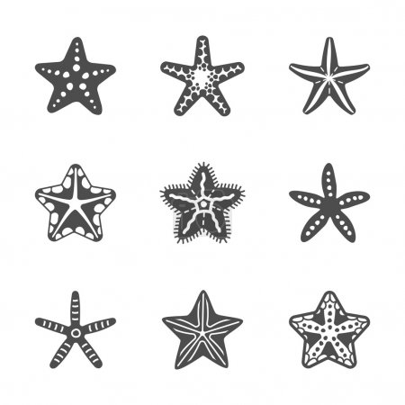 Vector shape set of various sea starfish