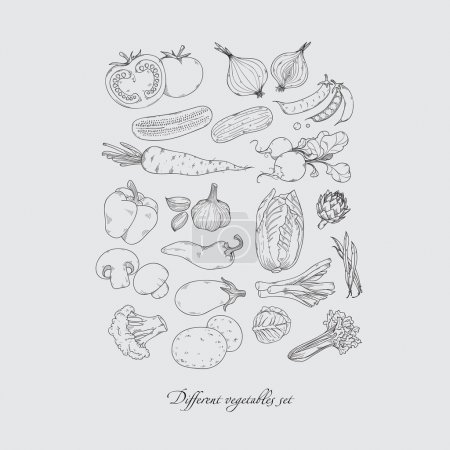 Collection of hand-drawn vegetables set, isolated vector  hand drawn doodle illustration.