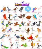 Wide variety of wild birds