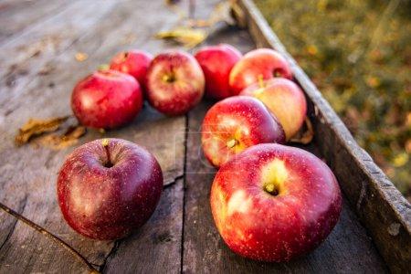 Photo pour Quelques pommes elstar rouges sur le bureau en bois dans le jardin - image libre de droit