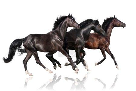 Foto de Tres caballo oscuro ejecutar galope - Imagen libre de derechos
