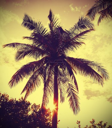 Vintage retro filtered picture of palm tree at sunset.