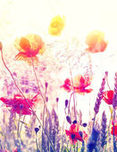 Abstract blurred nature background, summer meadow at sunrise.