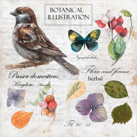 Illustration for Hand drawn botanical illustration in vintage style. Vector set of watercolor hand drawn sparrow, butterfly, barberries and dry flowers. Vintage background with letters and text. - Royalty Free Image