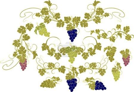 Illustration pour Eléments de design vectoriel dans un style vintage avec vignes . - image libre de droit