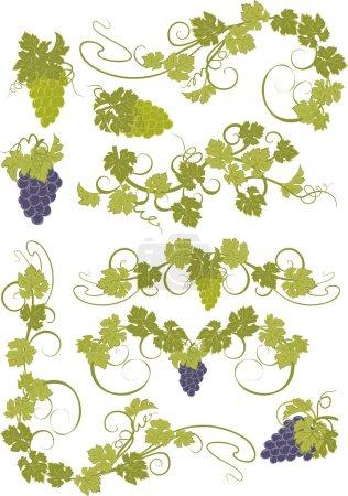 Illustration pour Eléments de design avec grappes de raisins et de vignes dans un style vintage . - image libre de droit