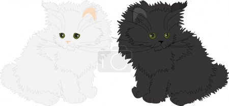 White and black fluffy cats.
