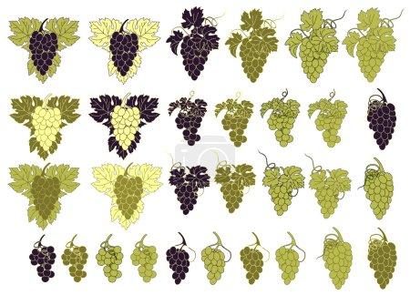 Illustration pour Un ensemble de grappes de raisins de différentes couleurs . - image libre de droit