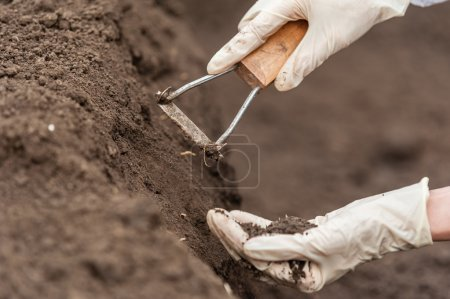 Photo for Close-up of a young researcher technician woman hands in greenhouse,in uniform, holding soil . Bio food production. - Royalty Free Image