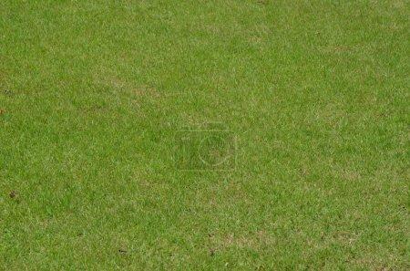 Foto de Cerca de pasto verde en el backgroiund golf club - Imagen libre de derechos