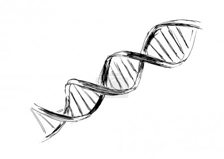 Illustration for Hand sketch the structure of DNA - Royalty Free Image