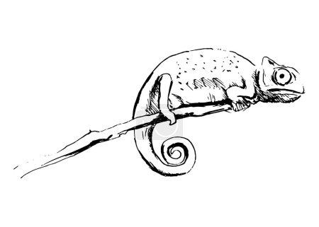 Hand sketch chameleon