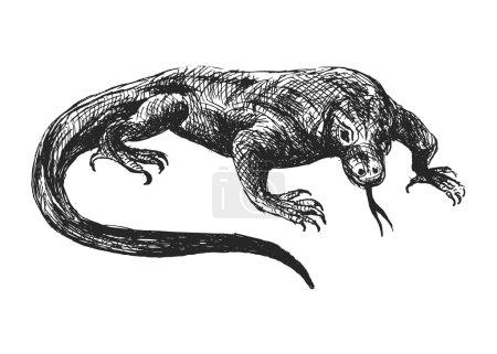 hand sketch varan