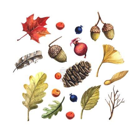 Photo pour Ensemble de style d'automne. Feuilles d'aquarelle, pommes de pin, glands et baies - image libre de droit
