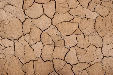 Photo for Dry soil background texture. - Royalty Free Image