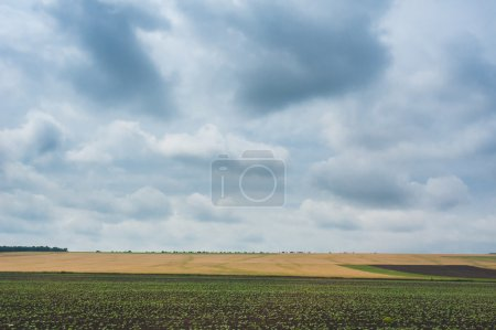 Photo for Sunset over agricultural green field. Dramatic sky and clouds - Royalty Free Image