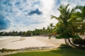 Palm trees on the Wild tropical caribbean sand beach in Dominican republic. tranquil resort. Caribbean Sea. sunset time, Seychelles islands