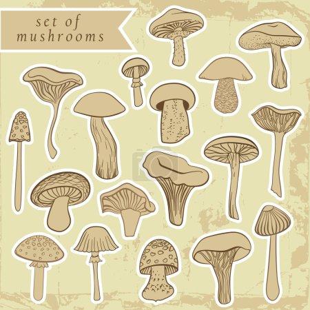 Vintage Set von verschiedenen handgezeichneten Pilzen in Pastelltönen