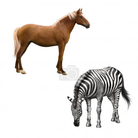 Horse and zebra