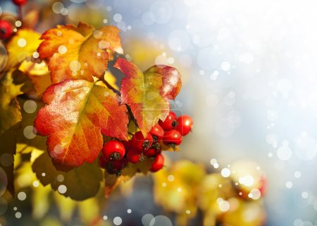Yellow leaves and red berries