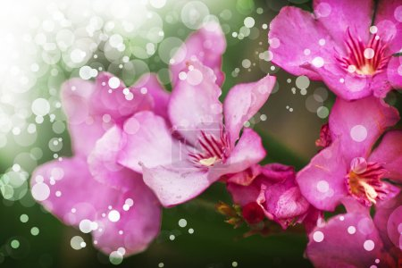 Photo for Bouquet of pink flowers close up on dark background, spring summer bloom - Royalty Free Image