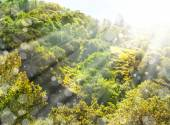 Green landscape with sun beams