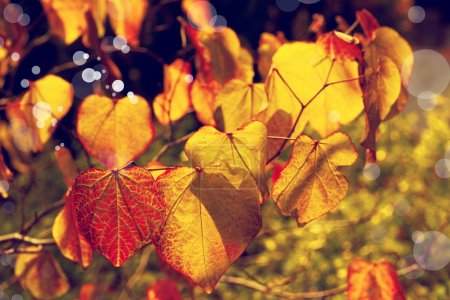 Yellow autumn leaves background