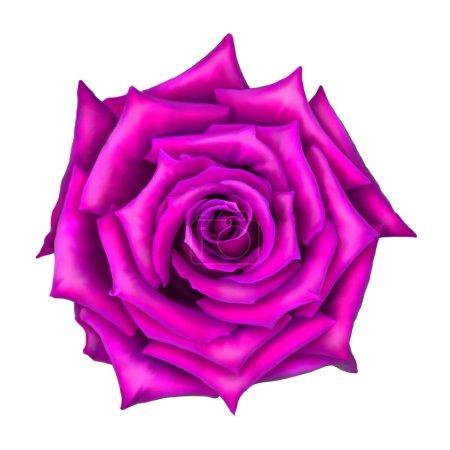 Pink Rose Flower bud