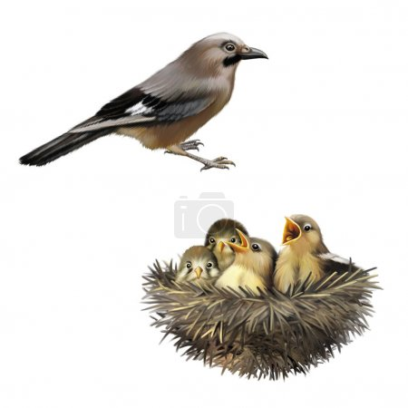 Four hungry baby sparrows in a nest wanting the mother bird to come and feed them, Bird nest with young birds, mother bird