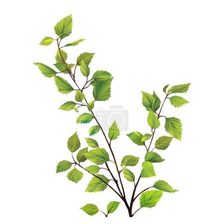 Foto de Hojas de abedul verde, rama con hojas frescas aisladas sobre fondo blanco - Imagen libre de derechos