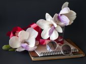 Pozadí s květy magnólie, sluneční brýle a pás karet