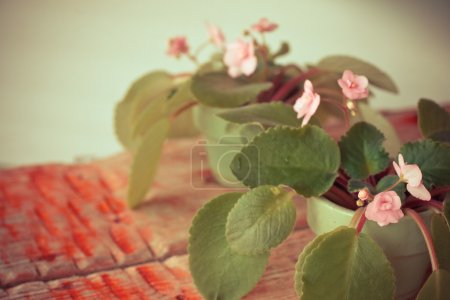 Violets on wooden table