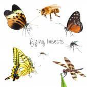 Hmyzu izolovaných na bílém pozadí