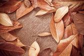 Podzimní pozadí s listy