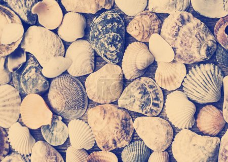 Shells on old wooden background