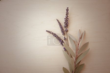 Background with Lavender flowers