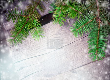 Background with fir branches