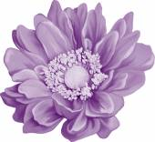 Purple Mona Lisa flower